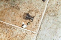 Το σπασμένο αυγό ορτυκιών και το ελικοειδές ράφι βρίσκονται στο πάτωμα Στοκ Φωτογραφίες