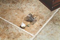 Το σπασμένο αυγό ορτυκιών και το ελικοειδές ράφι βρίσκονται στο πάτωμα Στοκ Φωτογραφία