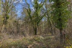το σπορείο ανθίζει το δασικό κορμό δέντρων δέντρων ηλιοφάνειας άνοιξη πράσινων φυτών στοκ εικόνες με δικαίωμα ελεύθερης χρήσης