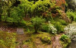το σπορείο ανθίζει το δασικό κορμό δέντρων δέντρων ηλιοφάνειας άνοιξη πράσινων φυτών Στοκ Εικόνα
