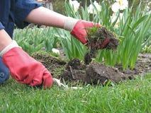 το σπορείο σκάβει τον κήπο λουλουδιών επάνω στον εργαζόμενο Στοκ εικόνες με δικαίωμα ελεύθερης χρήσης