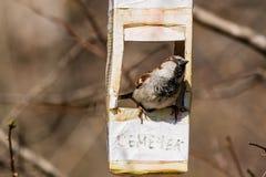 Το σπουργίτι πέταξε στον τροφοδότη πουλιών Στοκ φωτογραφία με δικαίωμα ελεύθερης χρήσης