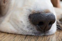το στενό αγαθό σκυλιών έννοιας πρέπει να κάνει τη μύτη να δείξει τη μυρωδιά κάτι επάνω όπου εσείς Στοκ Εικόνες