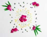 Το στεφάνι του ροζ βατραχίων αυξήθηκε λουλούδια φτερών και τομέων Στοκ φωτογραφία με δικαίωμα ελεύθερης χρήσης