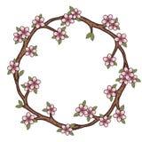 Το στεφάνι των κλάδων ανθών κερασιών Λουλούδια Sakura Στοκ εικόνα με δικαίωμα ελεύθερης χρήσης