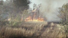 Το στοιχείο της πυρκαγιάς καίγοντας δάσος φιλμ μικρού μήκους