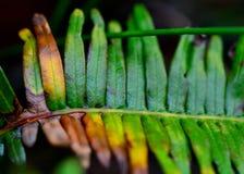 Το συμπαθητικό χρώμα στη φύση Στοκ Εικόνες