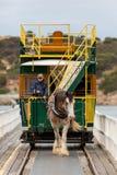 Το συρμένο άλογο τραμ μεταξύ του λιμανιού victor και του νησιού γρανίτη μέσα Στοκ Εικόνες