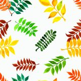 Το σχέδιο είναι άνευ ραφής με τα φύλλα φθινοπώρου Χειροποίητα φύλλα Watercolor Στοκ Φωτογραφίες