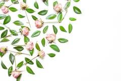 Το σχέδιο, σύνθεση των πράσινων φύλλων και των ρόδινων λουλουδιών, τριαντάφυλλα Στοκ Φωτογραφίες