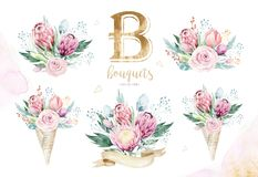 Το σχέδιο χεριών απομόνωσε το watercolor που η floral απεικόνιση με το protea αυξήθηκε, φύλλα, κλάδοι και λουλούδια Βοημίας χρυσό απεικόνιση αποθεμάτων