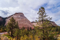 Το σχέδιο στην πέτρα Checkerboard Mesa, εθνικό πάρκο Zion στοκ φωτογραφία με δικαίωμα ελεύθερης χρήσης