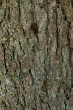 Το σχέδιο του φλοιού δέντρων Υπόβαθρο Όμορφη σύσταση Στοκ εικόνα με δικαίωμα ελεύθερης χρήσης