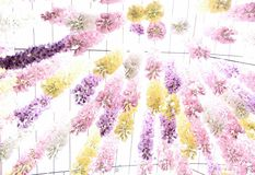 Το σχέδιο των μαλακών λουλουδιών Στοκ Εικόνες