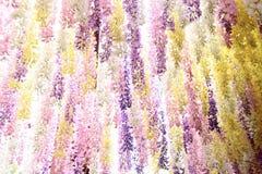 Το σχέδιο των μαλακών λουλουδιών Στοκ Φωτογραφίες