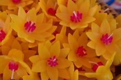 Το σύνολο λουλουδιών κεριών colur στοκ εικόνες
