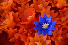 Το σύνολο λουλουδιών κεριών colur στοκ εικόνα με δικαίωμα ελεύθερης χρήσης