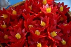 Το σύνολο λουλουδιών κεριών colur στοκ εικόνα