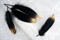 Το σύνολο πολυτέλειας επιχρύσωσε το χρυσό χρυσό μαύρο φτερό κύκνων στο άσπρο υπόβαθρο δαντελλών Στοκ Φωτογραφίες