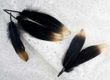 Το σύνολο πολυτέλειας επιχρύσωσε το χρυσό χρυσό μαύρο φτερό κύκνων στο άσπρο υπόβαθρο δαντελλών Στοκ εικόνα με δικαίωμα ελεύθερης χρήσης
