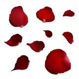 Το σύνολο ρεαλιστικού κόκκινου αυξήθηκε πέταλα στο άσπρο υπόβαθρο Στοκ Φωτογραφίες