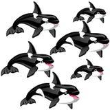 Το σύνολο σταδίων μιας αυξανόμενου φάλαινας ή ενός orca δολοφόνων που απομονώνεται σε ένα άσπρο υπόβαθρο επίσης corel σύρετε το δ Στοκ Εικόνες