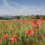 Το σύνολο τομέων των κόκκινων παπαρουνών και άλλου καλοκαιριού ανθίζει κοντά στο παλαιό χωριό στο λόφο στη γαλλική Προβηγκία Στοκ εικόνα με δικαίωμα ελεύθερης χρήσης