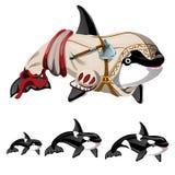 Το σύνολο φάλαινας ή orca δολοφόνων που απομονώνεται σε ένα άσπρο υπόβαθρο Διανυσματική απεικόνιση κινηματογραφήσεων σε πρώτο πλά Στοκ Φωτογραφία