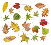 Το σύνολο φθινοπώρου χρωμάτισε τα φύλλα από το πάρκο που απομονώθηκε στο λευκό Στοκ φωτογραφίες με δικαίωμα ελεύθερης χρήσης