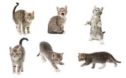Το σύνολο φωτογραφιών ενός χαριτωμένου λίγο γκρι χρωματίζει το εύθυμο γατάκι απομονώνει Στοκ φωτογραφία με δικαίωμα ελεύθερης χρήσης