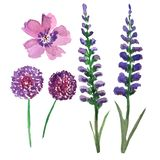 Το σύνολο watercolor ανθίζει στις ιώδεις σκιές - Alleum, lavender και άγρια λουλούδια απεικόνιση αποθεμάτων