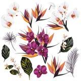 Το σύνολο διανύσματος απαρίθμησε τα λουλούδια ορχιδεών και ο φοίνικας βγάζει φύλλα Στοκ Φωτογραφίες
