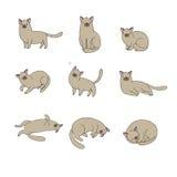 Το σύνολο διαφορετικού doodle θέτει τη γάτα pets διανυσματική απεικόνιση