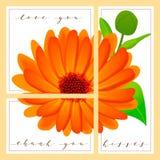 Το σύνολο καρτών με τις λέξεις σας αγαπά και σας ευχαριστεί, calendula στο υπόβαθρο Στοκ Εικόνες