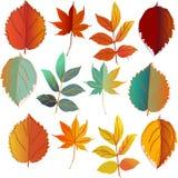 Το σύνολο πορτοκαλιού, κίτρινος και μέντας φύλλων βγάζει φύλλα τα σύνολα Στοκ Εικόνες