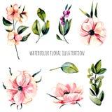 Το σύνολο ρόδινων λουλουδιών anemone watercolor, μούρα διακλαδίζεται και απεικόνιση πράσινων εγκαταστάσεων, χέρι που επισύρεται τ Στοκ φωτογραφία με δικαίωμα ελεύθερης χρήσης