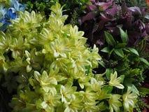 Το σύνολο χρώματος των ανθίσεων λουλουδιών Στοκ φωτογραφία με δικαίωμα ελεύθερης χρήσης
