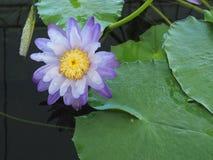 Το σύνολο χρώματος των ανθίσεων λουλουδιών Στοκ Εικόνες