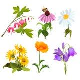 Το σύνολο echinacea, αιμορραγώντας καρδιά ανθίζει, arnica, viola, chamomile, παπαρούνα Στοκ Εικόνα