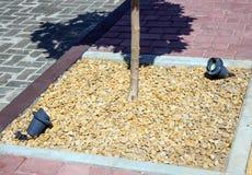 Το σύστημα του φωτισμού των δέντρων που φυτεύονται στο πεζοδρόμιο στοκ φωτογραφία με δικαίωμα ελεύθερης χρήσης