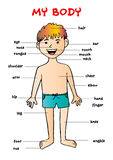 Το σώμα μου `, εκπαιδευτικό γραφικό διάγραμμα πληροφοριών για τα παιδιά Στοκ φωτογραφία με δικαίωμα ελεύθερης χρήσης