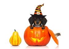 Το τέχνασμα σκυλιών φαντασμάτων αποκριών ή μεταχειρίζεται Στοκ φωτογραφία με δικαίωμα ελεύθερης χρήσης