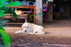 Το ταϊλανδικό λαϊκό σκυλί κρατά το ρολόι Στοκ φωτογραφία με δικαίωμα ελεύθερης χρήσης
