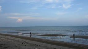 Το ταϊλανδικό σκάψιμο τσουγκρανών χρήσης ανθρώπων ατόμων βρίσκει τα οστρακόδερμα στην παραλία στο Σουράτ Thani, Ταϊλάνδη απόθεμα βίντεο