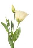 το τεμάχιο λουλουδιών &alp στοκ εικόνα