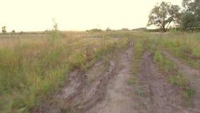 Το τεριέ του Γιορκσάιρ το σκυλί τρέχει στο δρόμο βίντεο κινήσεων φύσης steadicam στο πυροβοληθε'ν απόθεμα βίντεο