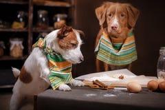 Το τεριέ του Jack Russell φυλής σκυλιών και Retriever διοδίων παπιών της Νέας Σκοτίας σκυλιών, τρόφιμα είναι στον πίνακα στην κου Στοκ Φωτογραφίες