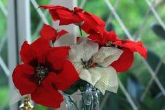 το τεχνητό λουλούδι ανασκόπησης απομόνωσε το λευκό Στοκ Φωτογραφία