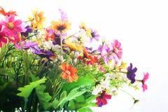 το τεχνητό λουλούδι ανασκόπησης απομόνωσε το λευκό Στοκ Εικόνες