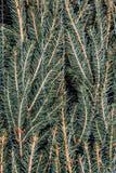 Το τιμολόγιο ενός χριστουγεννιάτικου δέντρου που τυλίγεται σε ένα δίχτυ Στοκ Φωτογραφίες